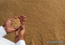 مرحلة ترقب تحدد أسعار الأرز الموسم المقبل.. والمخزون مستقر عند 25% اعتبارًا من أكتوبر المقبل لتحديد الدول المصدرة حسب الإنتاج