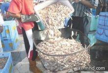 الزراعة تحدد مواعيد موسم صيد الربيان
