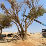 القوات الخاصة للأمن البيئي تضبط مخالفين لنظام البيئة يقومون بنقل الرمال وتجريف التربة
